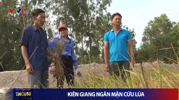Kiên Giang: Cứu lúa trước tình hình nước mặn xâm nhập sâu vào nội đồng