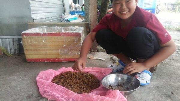 Kiên Giang: Xử lý rác thải hữu cơ bằng ruồi lính đen