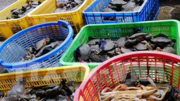Cua biển Kiên Giang có nơi giá chỉ 110.000 đồng/kg mà vẫn ế