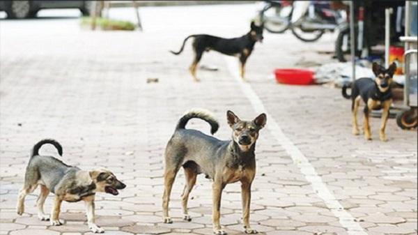 Kon Tum: Tử vong vì chủ quan với... chó nhà