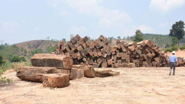 Kon Tum: Nghi vấn vụ 84 m3 gỗ không rõ nguồn gốc được 'trà trộn' rồi kéo ra khỏi rừng
