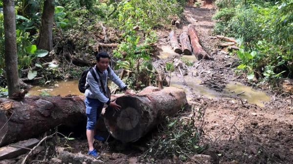 Kon Tum: Rừng phòng hộ Văn Lem bị xâm hại