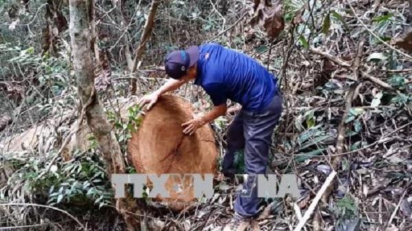 Rừng ở Đăk Tô, Kon Tum lại bị xâm hại