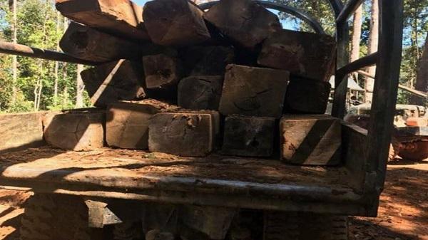 Kon Tum: Đang vận chuyển gỗ, một người bị gỗ đè t.ử v.o.n.g tại chỗ