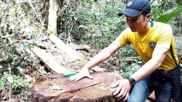 Kon Tum: Phát hiện 25m3 gỗ vi phạm trong vụ phá rừng bên suối Đắk Rờ Tiên