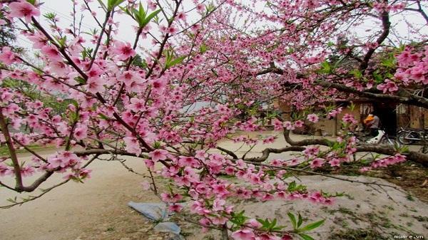 Say đắm những mùa hoa nở rộ trong năm