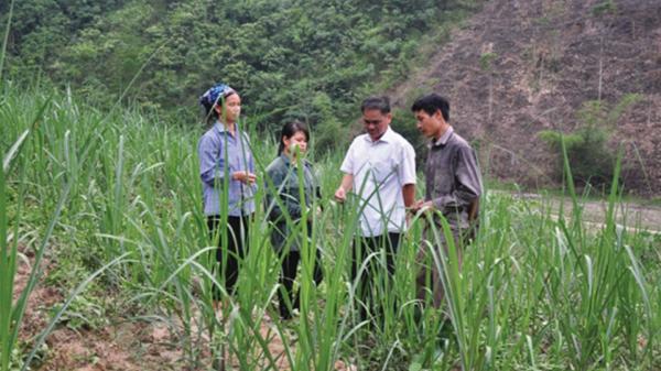 Lai châu: hỗ trợ công tác xóa đói giảm nghèo ở huyện Mường Tè.