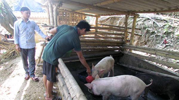 Huyện Phong Thổ hỗ trợ hội viên phát triển kinh tế