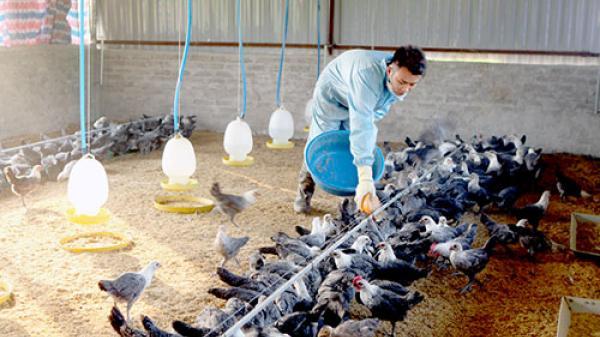 Thăm mô hình chăn nuôi gà siêu trứng của anh Đông ở Huyện Nậm Nhùn