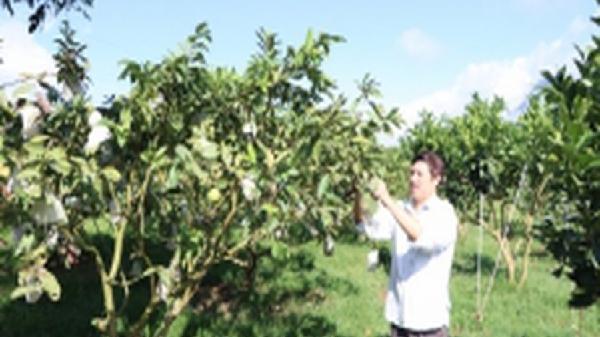 Tân Uyên thoát huyện nghèo từ sản xuất nông nghiệp hàng hóa