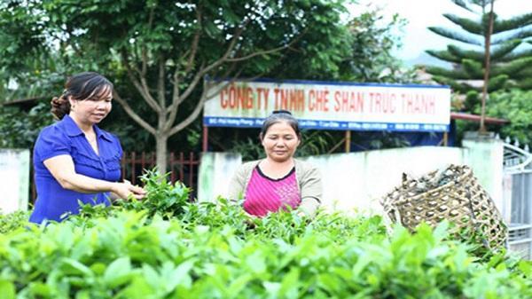 Người phụ nữ Lai Châu làm giàu từ việc phủ xanh vùng đất khô cằn