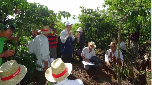 Chương trình kết nối chuỗi giá trị cà phê năm 2017 tại Tây Nguyên
