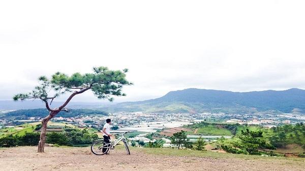 Những hình ảnh cuối tuyệt đẹp về cây thông cô đơn trên đồi Thiên Phúc Đức lắng đọng trong tim người yêu Đà Lạt…
