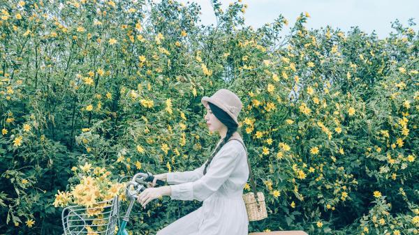 Ngợp trước rừng hoa dã quỳ Đà Lạt vàng rực qua ống kính của nhiếp ảnh tự do Sài Gòn