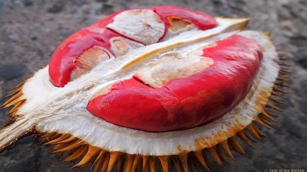 Sầu riêng ruột đỏ hot rần rần đảm bảo sẽ khiến fan sầu riêng thích thú