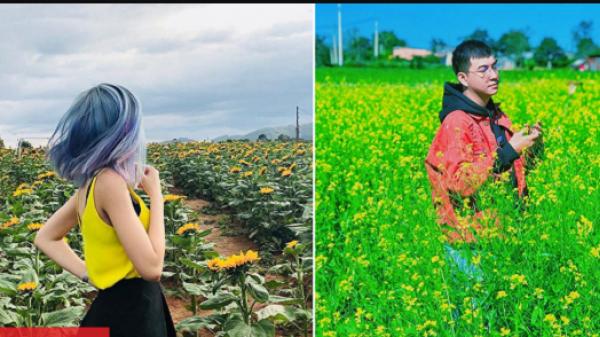 Xuất hiện vườn hoa bốn mùa 'xanh đỏ tím vàng', lãng mạn như xứ Hàn tại Đà Lạt