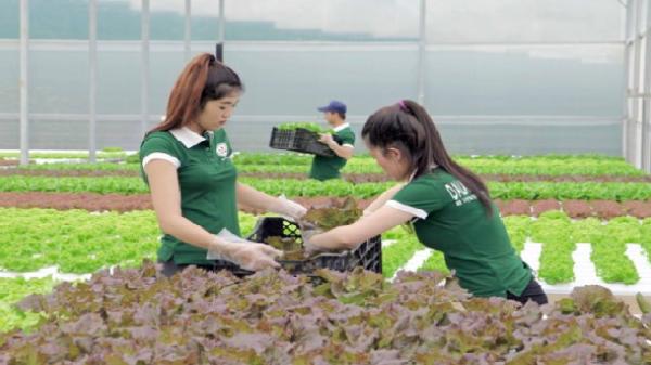 Lâm Đồng và TPHCM hợp tác sản xuất, tiêu thụ nông sản an toàn