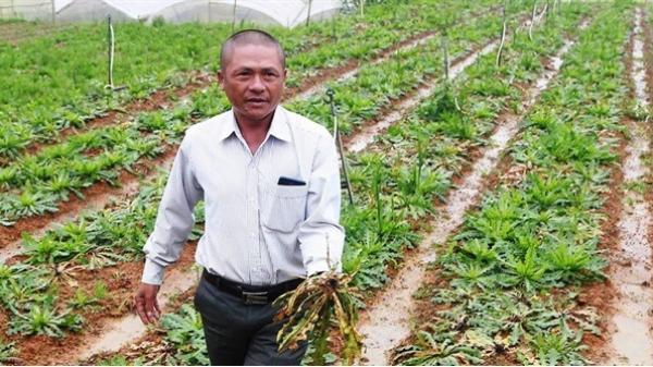 Lâm Đồng: Bón phân Trung Quốc, hoa chết hàng loạt