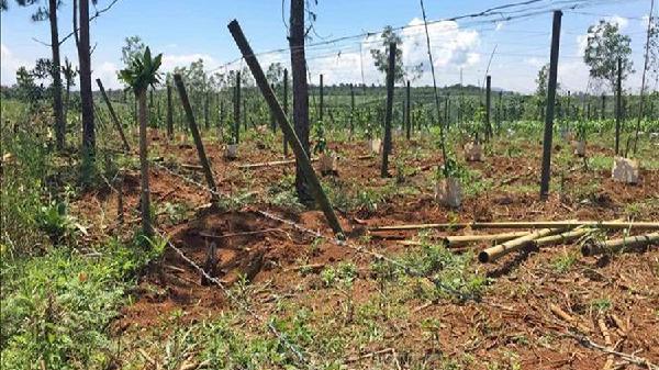Phối hợp giải tỏa cây trồng, công trình trái phép trên đất trồng rừng ở Lâm Đồng