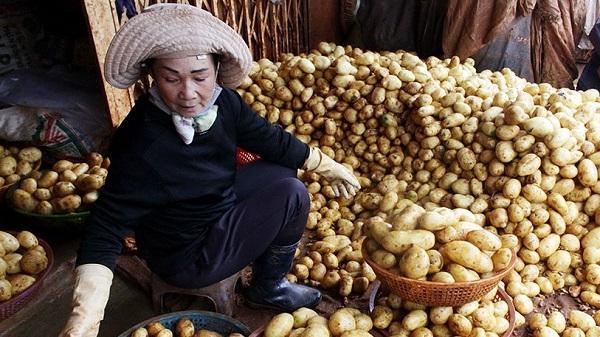 Ba tháng nhập trên 100 tấn khoai tây Trung Quốc