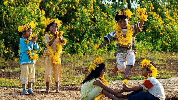 Dã quỳ, loài hoa nhuộm vàng tuổi thơ của những đứa trẻ Tây Nguyên