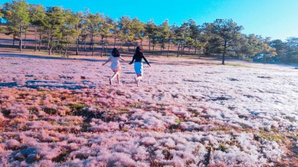 Đồi cỏ hồng tuyệt đẹp như khung trời Âu giữa Đà Lạt mộng mơ