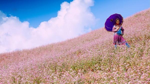 Những mùa hoa cuối năm vẫy gọi khách phương xa