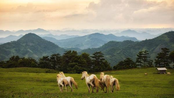 'Vương quốc' ngựa bạch lớn nhất Việt Nam ở Lạng Sơn