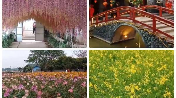 Ngay gần Lạng Sơn cũng có một cánh đồng hoa tuyệt đẹp cho bạn thỏa sức sống ảo