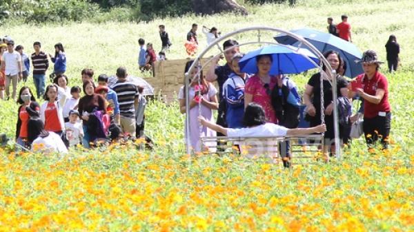 Thung lũng hoa Bắc Sơn: Điểm đến níu chân du khách