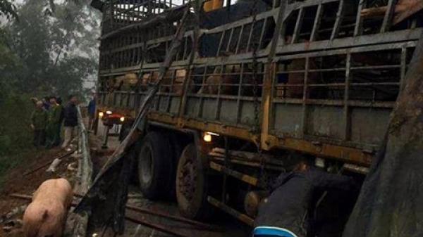 """Thực hư xe chở lợn bị lật, dân thi nhau """"hôi của"""" ở Lạng Sơn"""