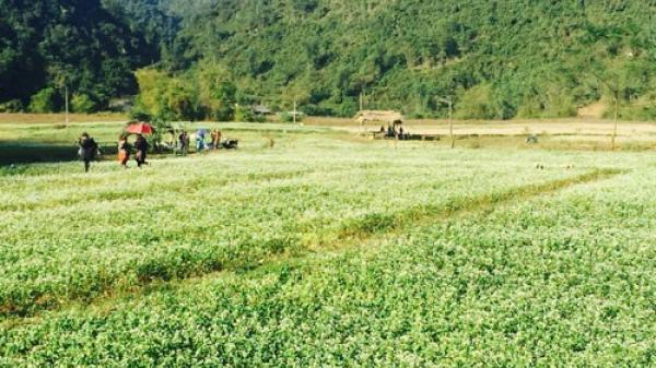 Không cần Hà Giang, Lạng Sơn cũng có thung lũng tam giác mạch tuyệt đẹp