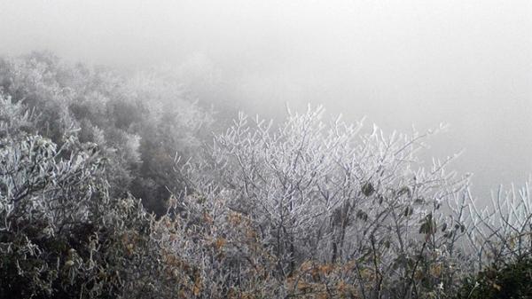 Đêm nay, vùng núi cao Lào Cai cần đề phòng sương muối
