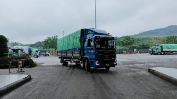 Lào Cai: Xuất khẩu 3.000 tấn quả chuối tươi sang thị trường vùng tây nam Trung Quốc