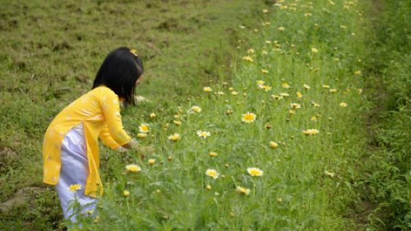 Lào Cai sẽ tổ chức Chợ hoa xuân Mậu Tuất 2018 trong 10 ngày
