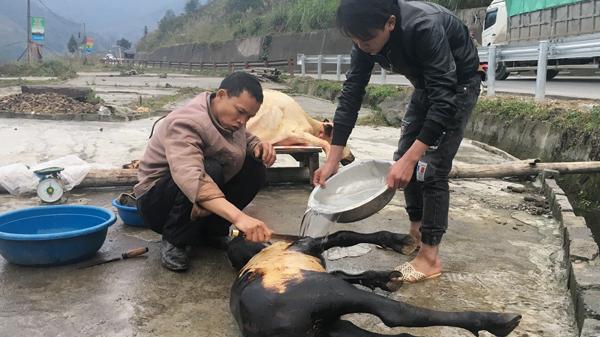 """Lào Cai: Trâu chết vì rét, người dân lập lò mổ """"dã chiến"""" bán ngay vệ đường"""