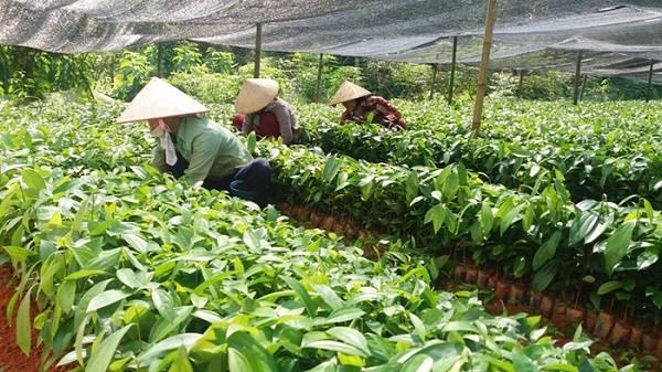 Lào Cai: Sẽ di dời 380 hộ dân khỏi vùng thiên tai nguy hiểm trong năm 2018