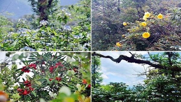 Ngắm hoa rừng trên đường chinh phục núi Lảo Thẩn