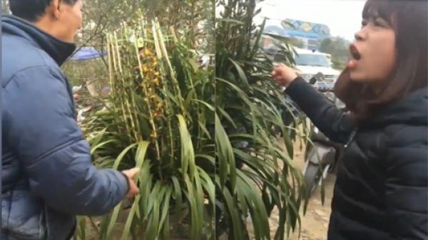 Lào Cai: Bỏ hơn 5 triệu mua hoa chơi Tết, cô gái ngậm ngùi phát hiện toàn bộ hoa trên cây là giả