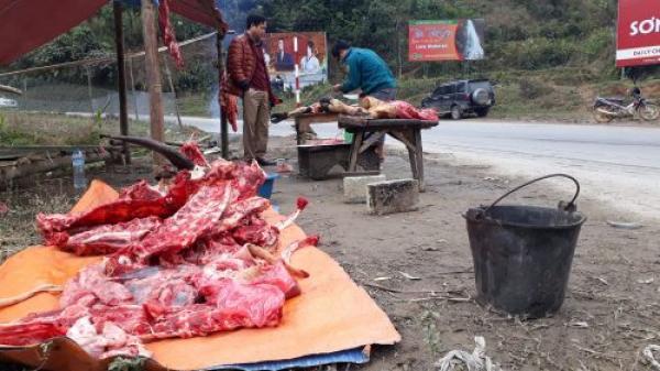 Chỉ trong một ngày, Lào Cai có tới 77 con gia súc chết rét