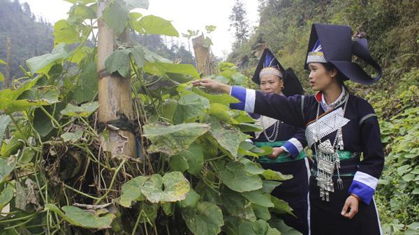 Bản giàu ham học chữ tại Lào Cai