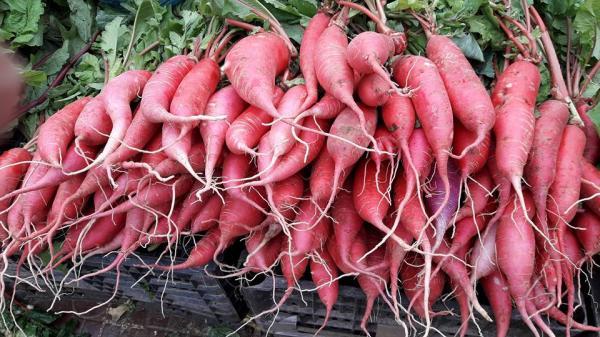 Hấp dẫn củ cải đỏ Sa Pa