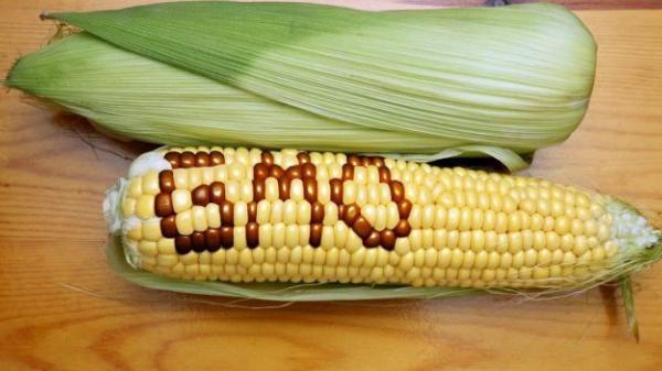 Những thực phẩm càng ăn càng 'nuôi' ung thư