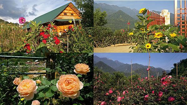 Lạc bước vào khu vườn đẹp như cổ tích, bốn mùa hoa thay nhau nở rộ ở Sa Pa