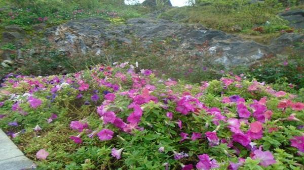 Lào Cai: Ngỡ ngàng với hàng trăm loài hoa đua nở nơi núi rừng Tây Bắc