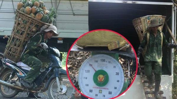 Lào Cai: Người đàn ông đeo 130kg dứa trên vai đến bán khiến thương lái không tin vào mắt mình