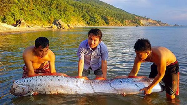 Cá hố rồng dài hơn 3m dạt vào bờ biển Hà Tĩnh