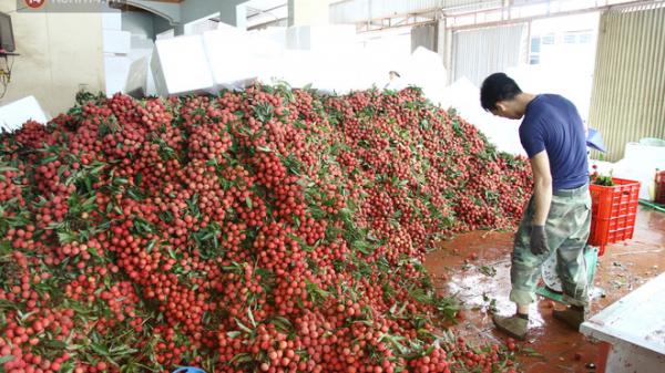 """Về Bắc Giang thăm người dân Lục Ngạn trước thông tin 10 ngàn 3kg vải thiều: """"Làm gì có chuyện chúng tôi ném vải xuống sông"""""""