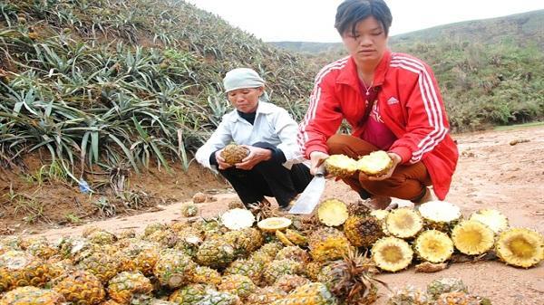 Nhà máy luyện kim 'phản pháo' tỉnh Lào Cai 'vụ dứa thối'