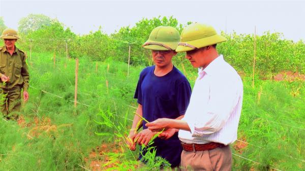 Phú Thọ: Chỉ 2 sào măng tây xanh, hái mầm mỗi ngày, thu 12-18 triệu/tháng